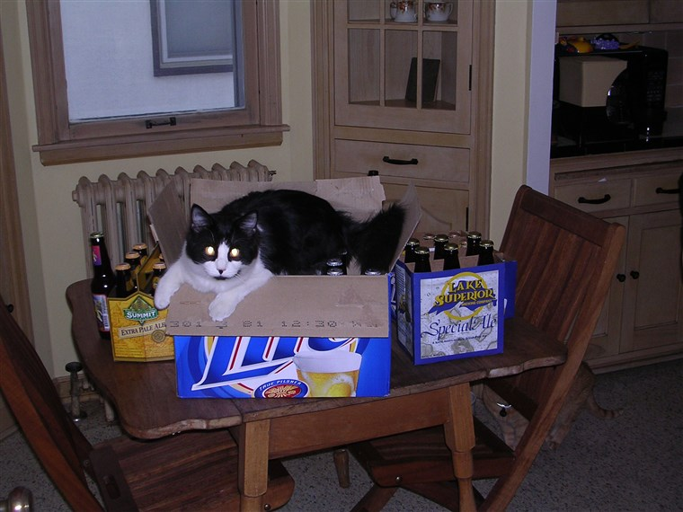 책임 the cat in a beer box