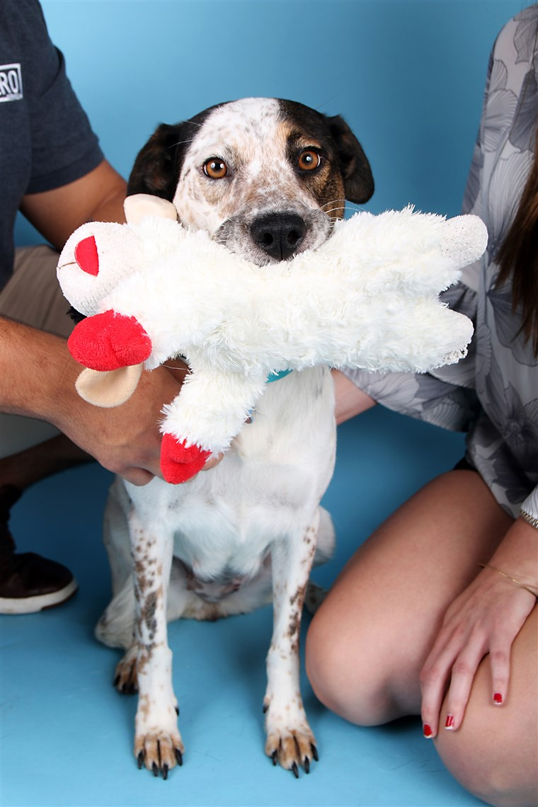 犬 abandoned by the side of the road in Dallas is adopted