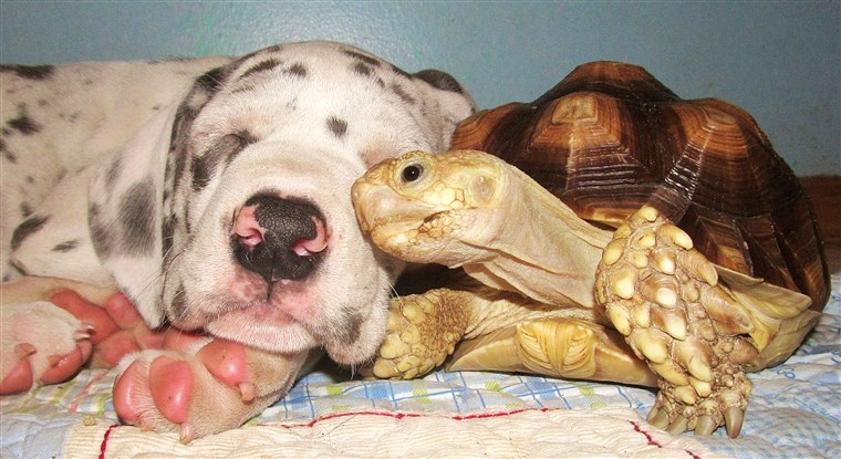 クルトン the tortoise really loves puppies.