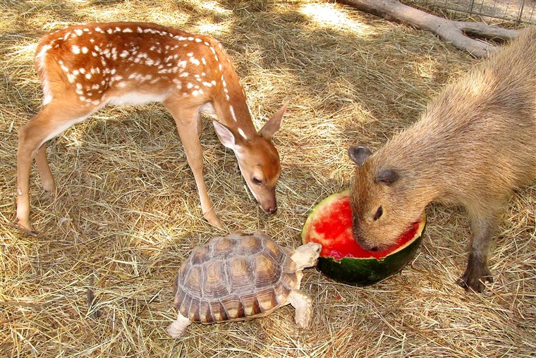 すべて kinds of animals form friendships at the sanctuary.