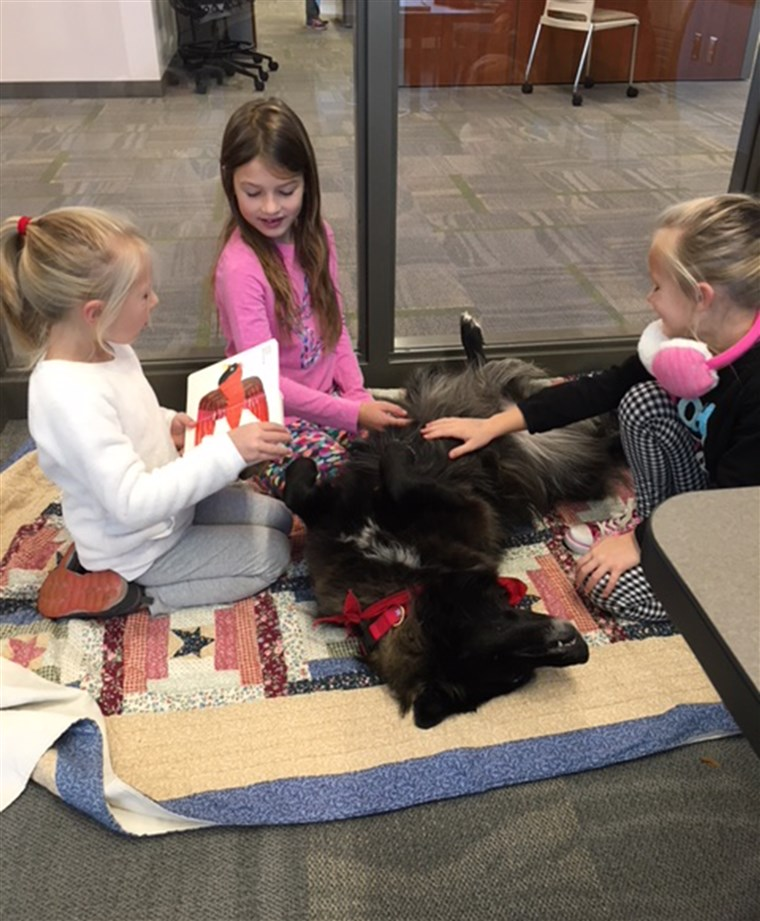 슬퍼 library dog attracts kid readers