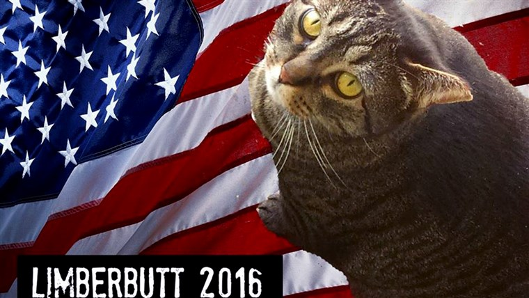 Limberbutt McCubbins, a cat running for president in 2016